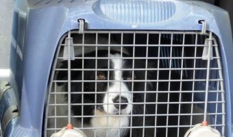 Gotta leave the house without Fido? Find out just how long you can safely leave a dog in a crate during the day. Read it now!