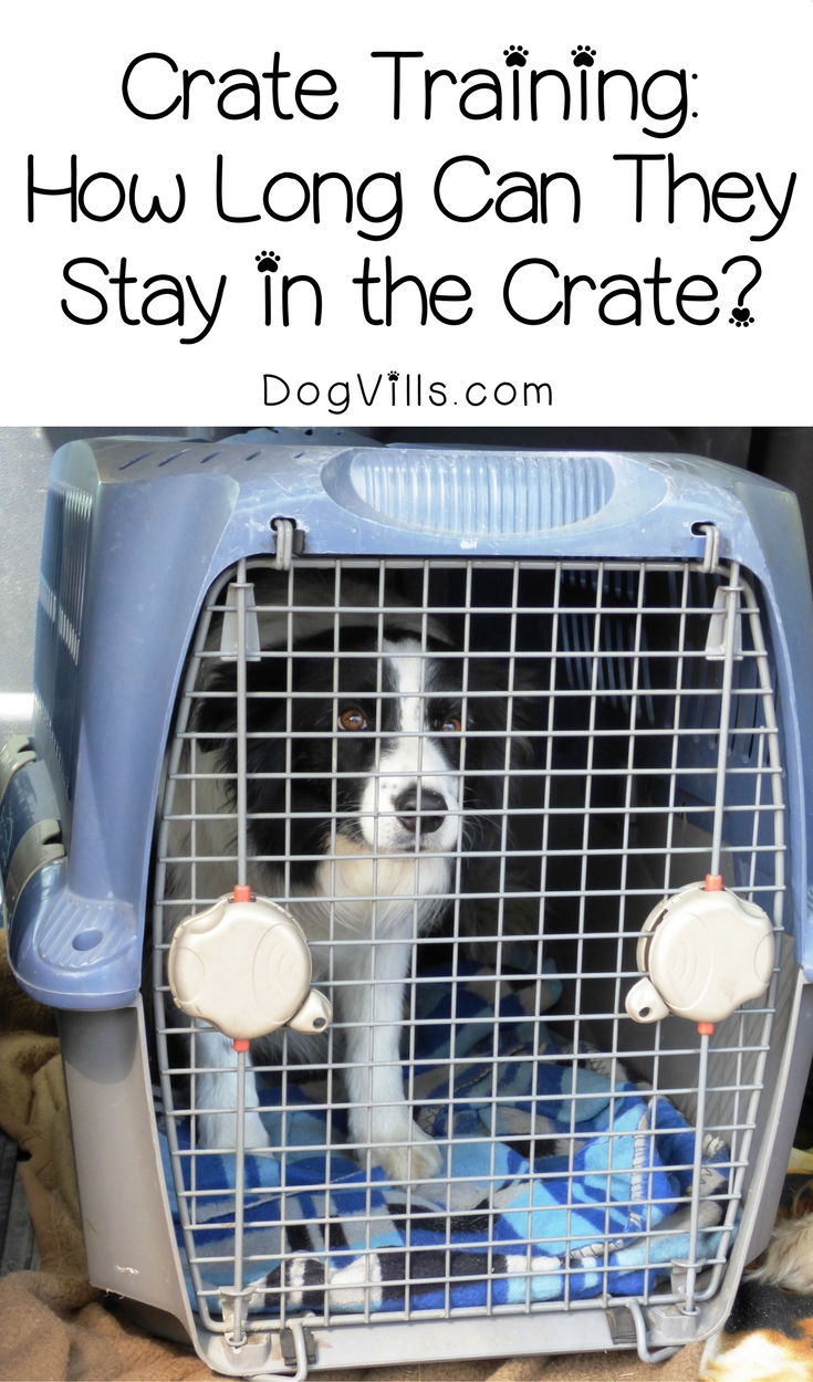 Crate Training – How Long Can They Stay in the Crate?