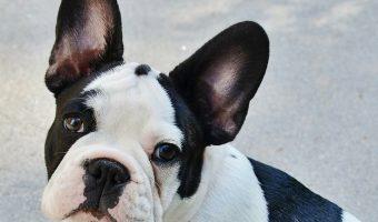 3 Cutest Celebrity Dogs on Facebook
