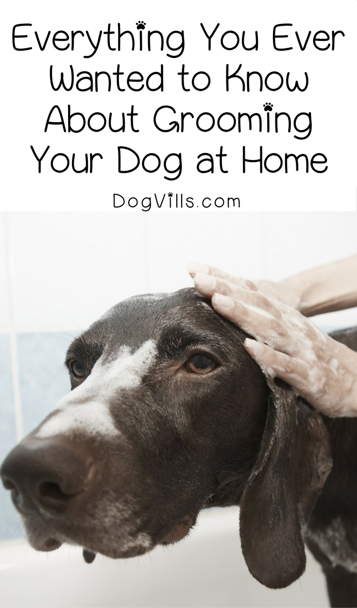 Everything You Need to Know about Grooming Your Dog at Home