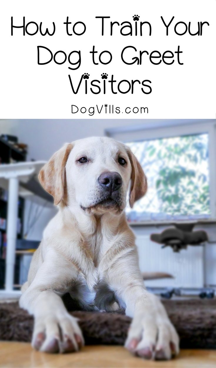 How To Train Your Dog To Greet Visitors
