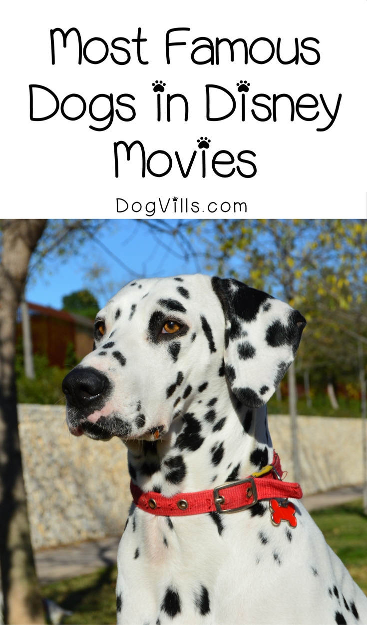 Most Famous Dogs in Disney Movies