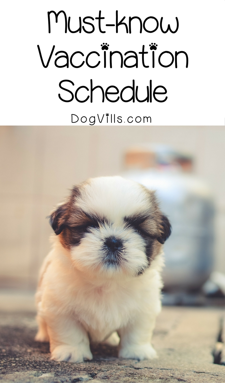 Must-Know Vaccinations Schedule For Dog Owners