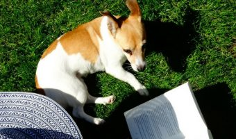 Who Said Dogs Can't be Bookworms? 12 Dogs That Love Reading