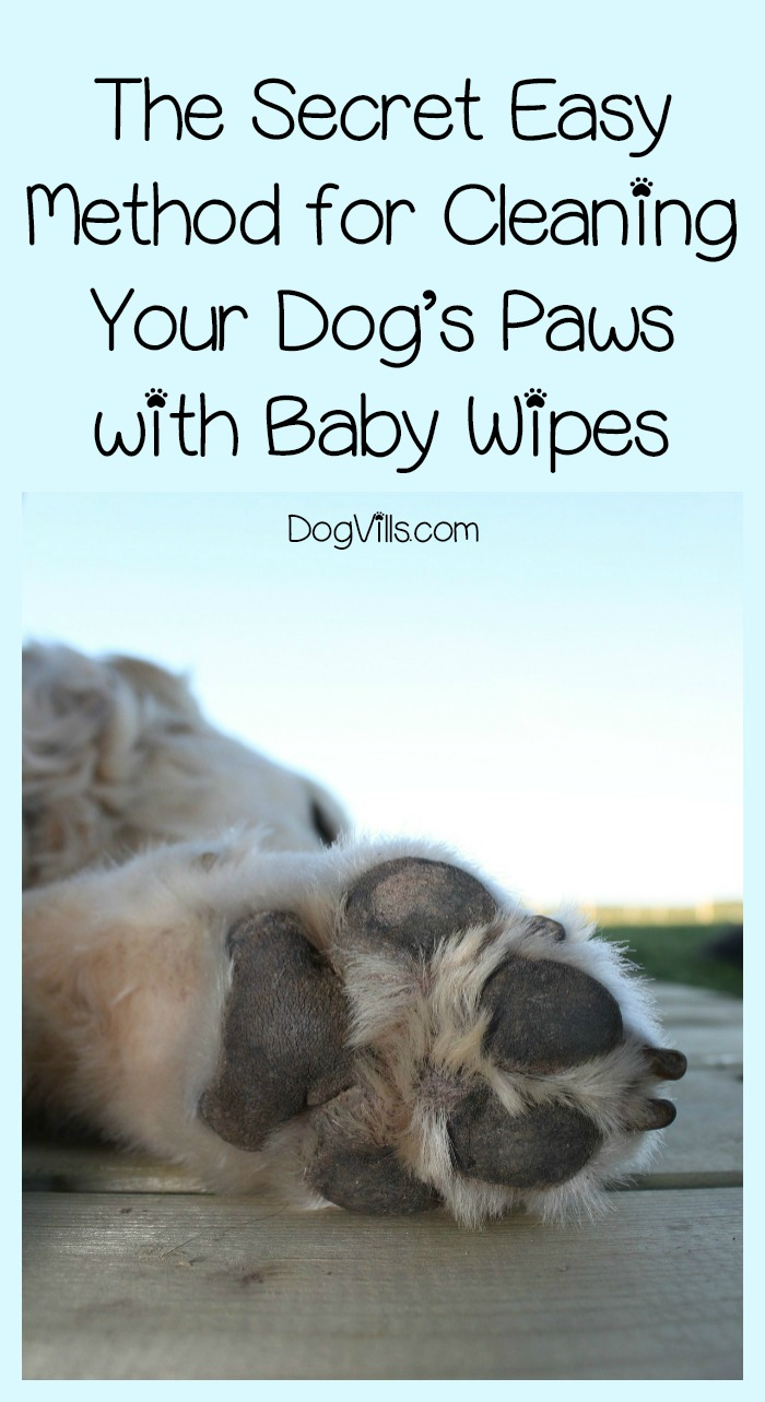 The Secret Easy Method for Cleaning Dog Paws with Baby Wipes