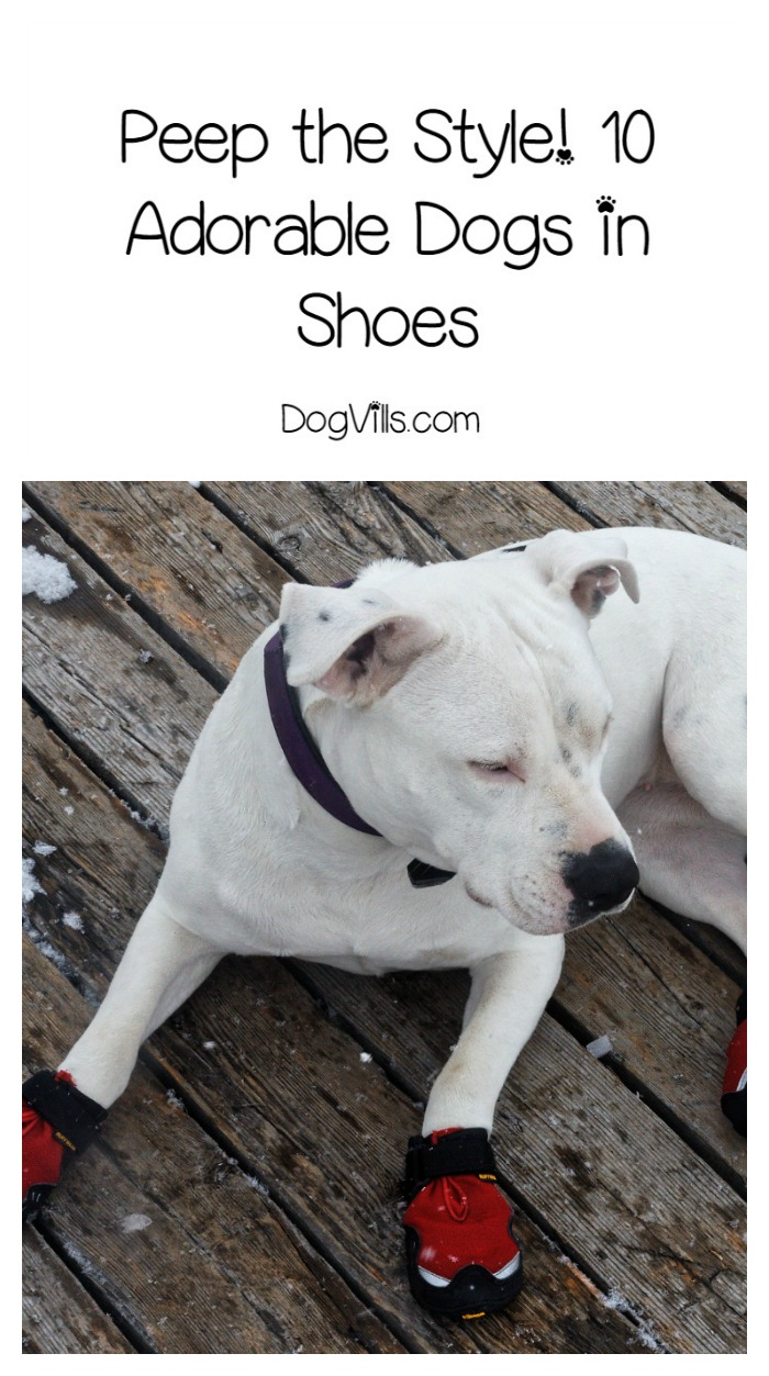 10 Pictures Of Dogs in Shoes You Need in Your Life Right Now