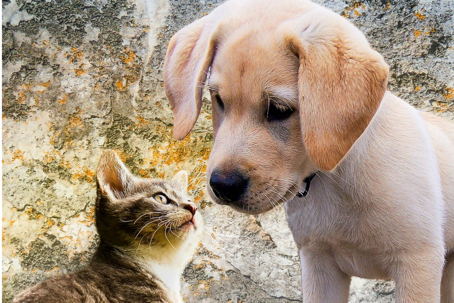Dogs Vs Cats Man S Best Friend Takes The Cake Dogvills