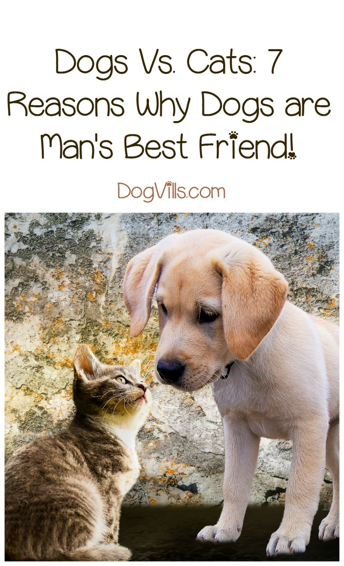 Dogs Vs. Cats: Man's Best Friend Takes the Cake!