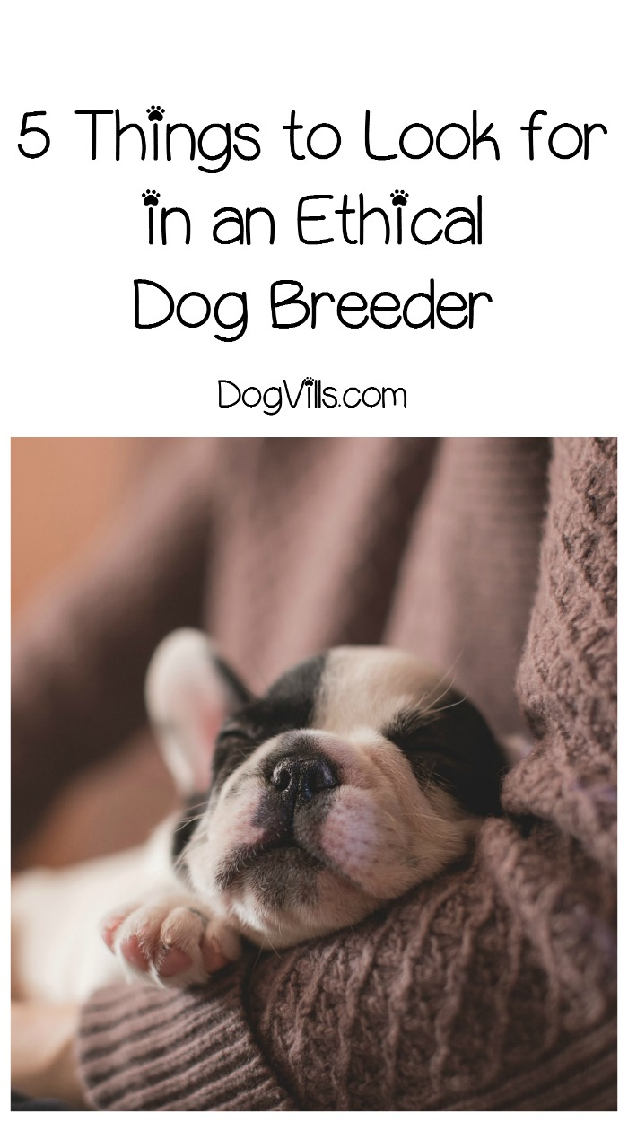 5 Steps to Find an Ethical Dog Breeder