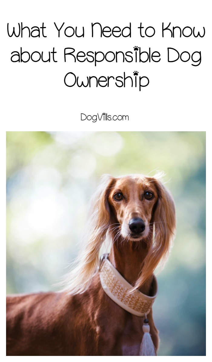 What You Need to Know about Responsible Dog Ownership