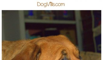 10 Simple Ways to Relieve Dog Boredom