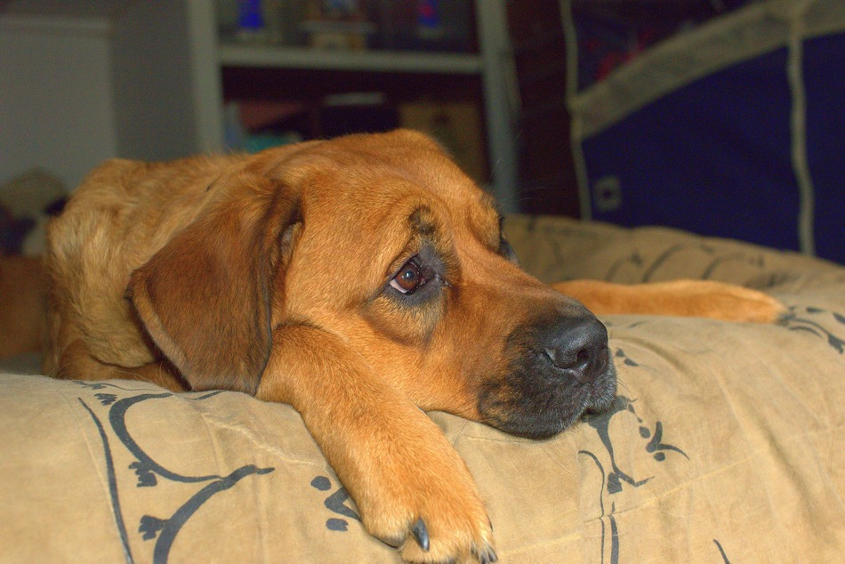 10 Simple Ways To Relieve Dog Boredom Dogvills