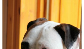 Fido making a mad dash to escape every time you open the door? Check out 5 training tips to prevent your dog from running out the door!