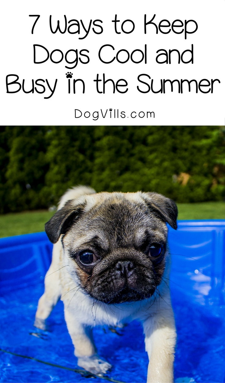 7 Ways to Keep Dogs Cool and Busy in the Summer