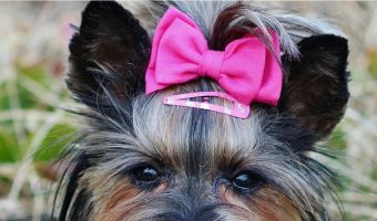 The 4 Most Pampered Dogs in Hollywood