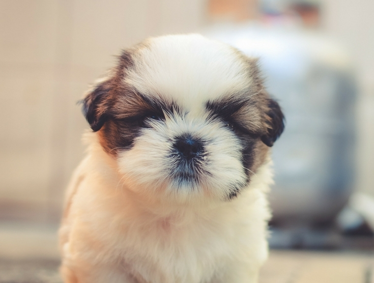 Must Know Puppy Vaccination Schedule For Dog Parents
