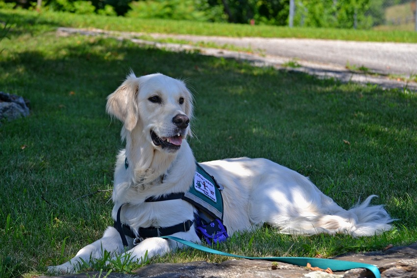 4 Amazing Ways Service Dogs Can Help Kids With Autism