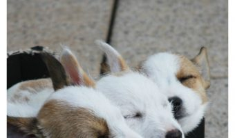 13 of The Cutest Puppy Naps You'll See All Day