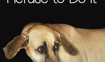Eating Alone – Why Some Dogs Won't Do It