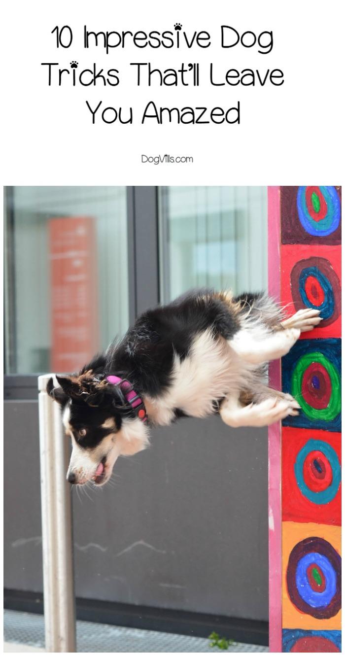 10 Impressive Dog Tricks That'll Leave You Amazed