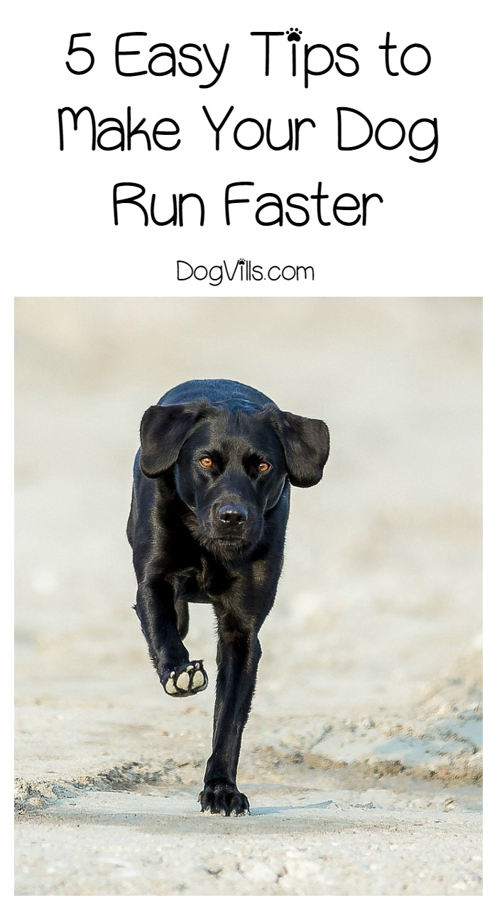 5 Easy Tips to Make Your Dog Run Faster