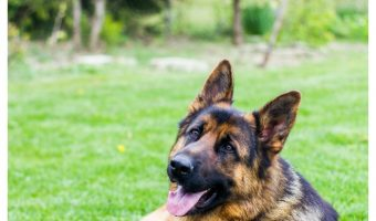 5 Ways to Lower the Risk of Hip Dysplasia Ever Dog Parent Needs to Know