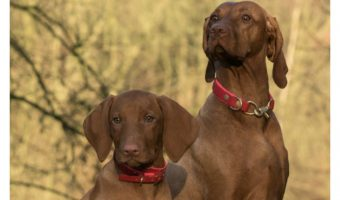 How to Deal with Sibling Rivalry in Dogs