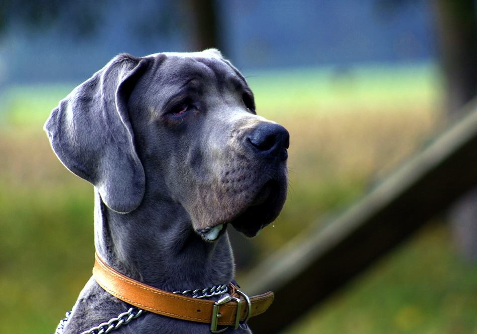 Best Dog Names For A Male Boxer