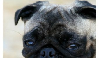 This Amazing Study Suggests That Dogs Can Talk to Humans!