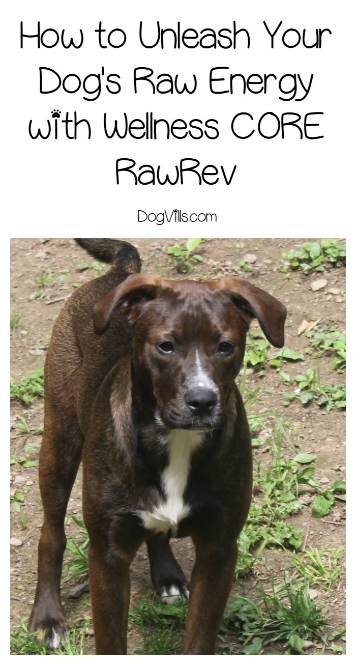How to Unleash Your Dog's Raw Energy with Wellness® CORE™ RawRev™
