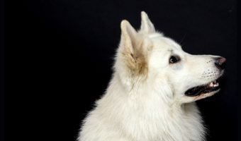5 Must-Teach Basic Commands that Every Dog Should Know