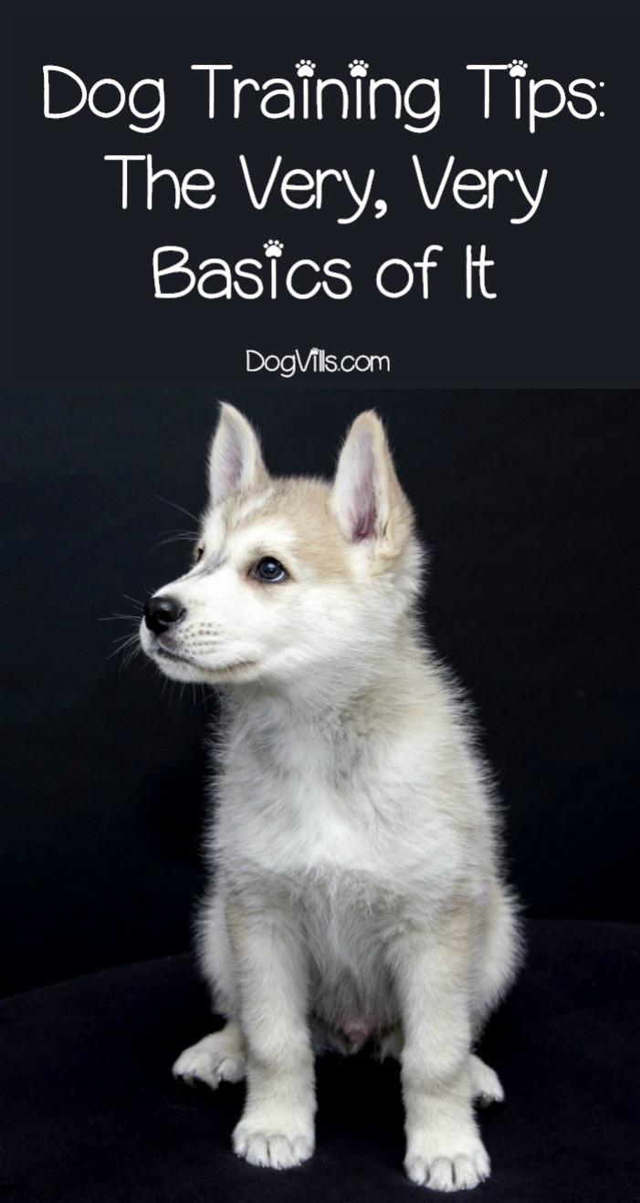 Dog Training Basics – The Very, Very Basics of It