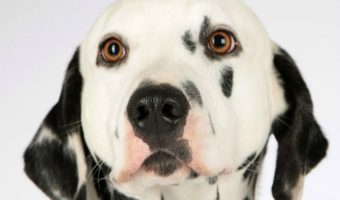 20 Adorable Disney Inspired Dog Names We Love