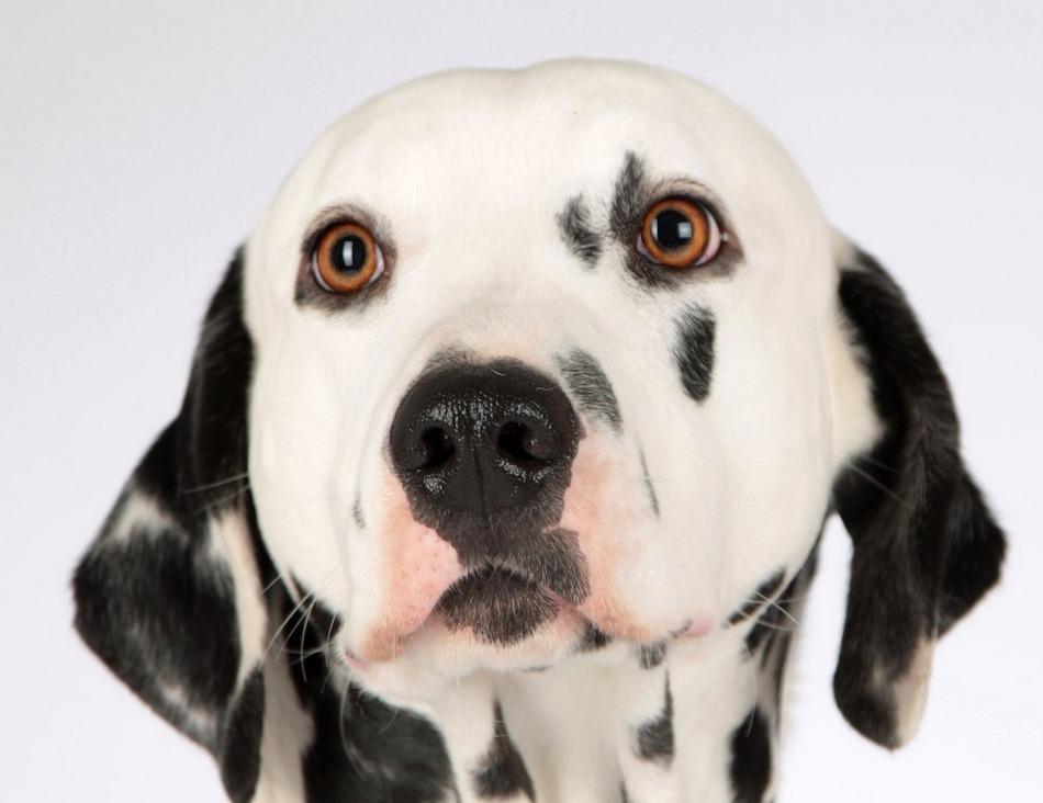 Adorable Female Dog Names