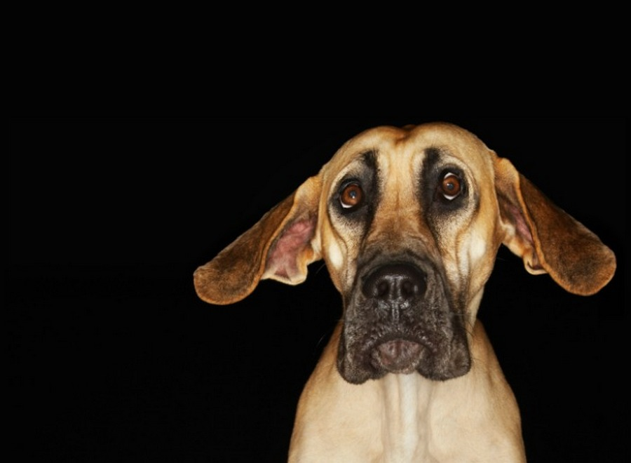 Natural Remedies For Anxiety Dogs