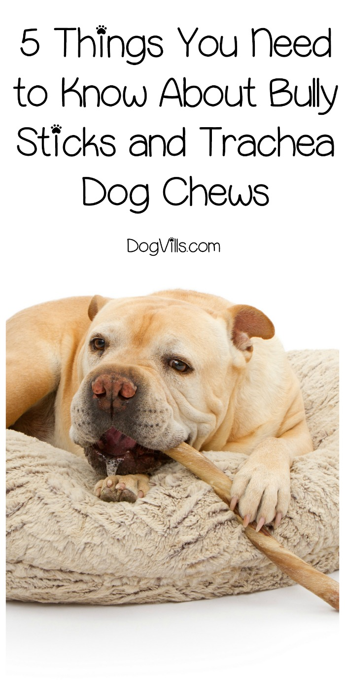 5 Things You Need to Know About Bully Sticks and Trachea Dog Chews