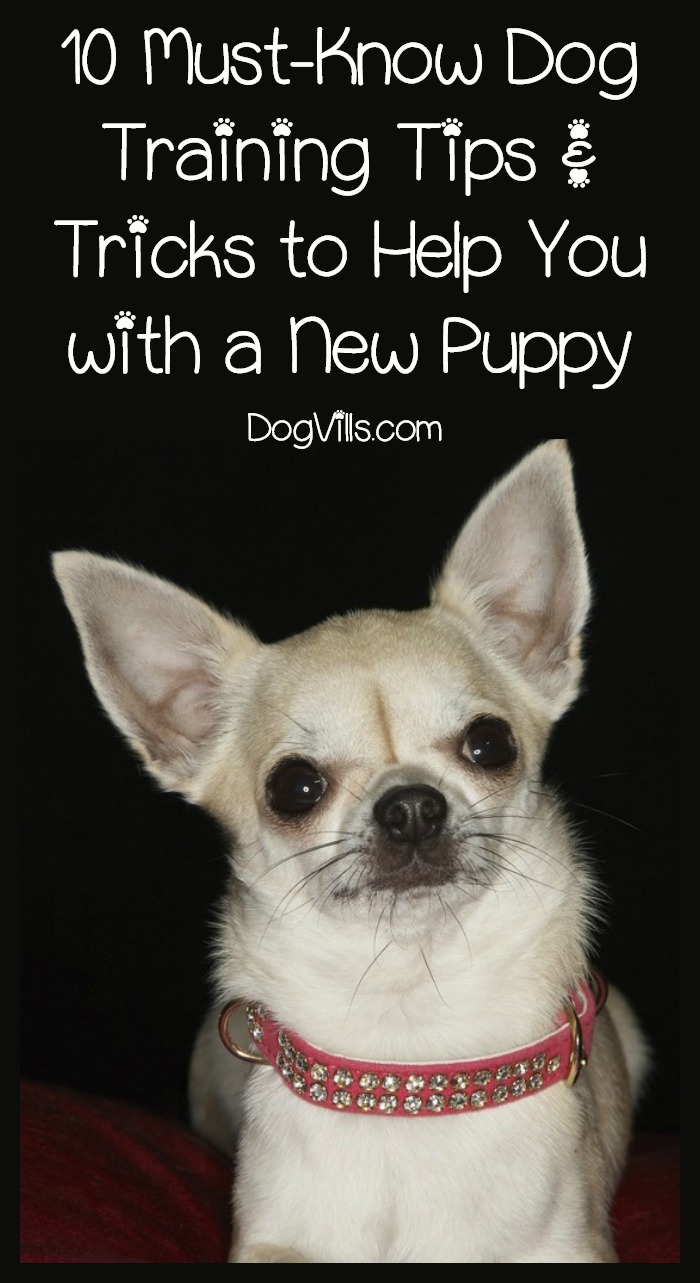 10 Must Know Dog Training Tips Tricks To Help You With A New Puppy Http Www Dogvills Com