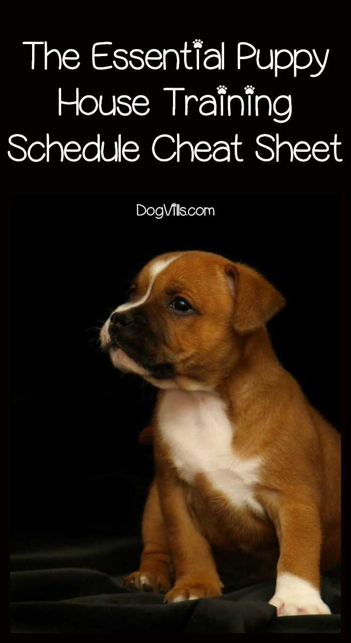 The Puppy House Breaking Schedule Cheat Sheet You Need Dogvills