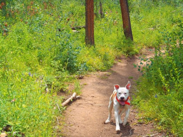 How do you get your dog to quit running off? Train him to stay, of course. Check out our tips to keep Fido from fleeing!