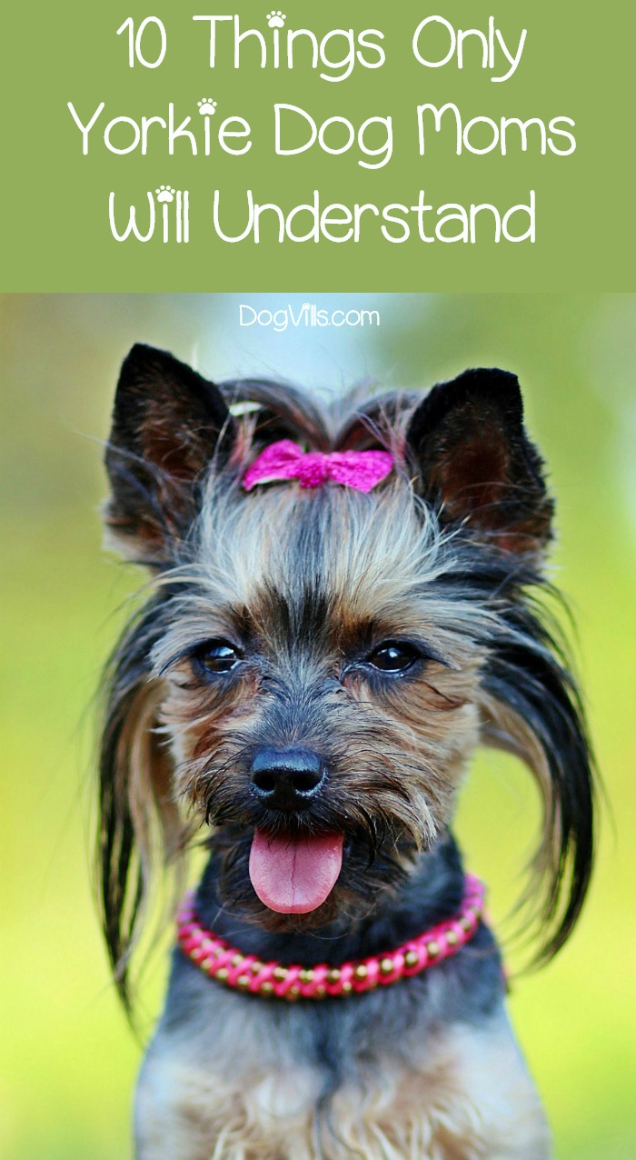 10 Things Only Yorkie Moms Will Understand