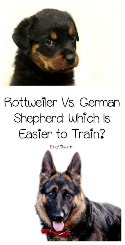 Rottweiler Vs. German Shepherd: Which Is Easier to Train?