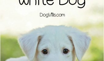 Looking for some cute white dog names for your new puppy? Check out these 15 fun monikers! Which one is your favorite?