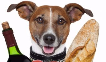 We know you can take your dog to the mall and some pet-friendly hotels, but are dogs allowed in grocery stores? Find out if Fido can go food shopping with you!