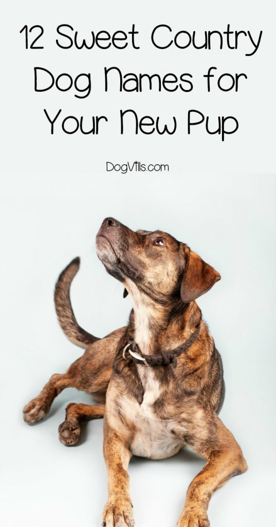 12 Sweet Country Dog Names For Your New Pup Dogvills