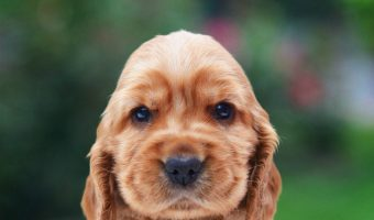 Top 12 Dog Breeds That Have the Cutest Puppies Ever