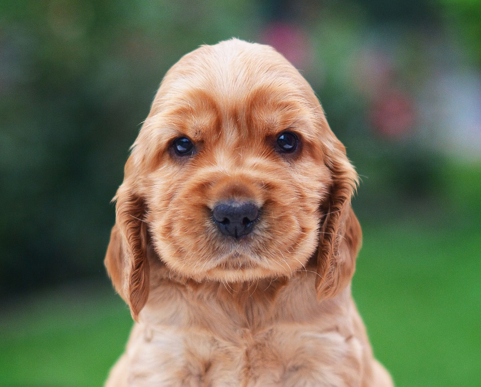Top 12 Dog Breeds That Have The Cutest Puppies Ever Dogvills