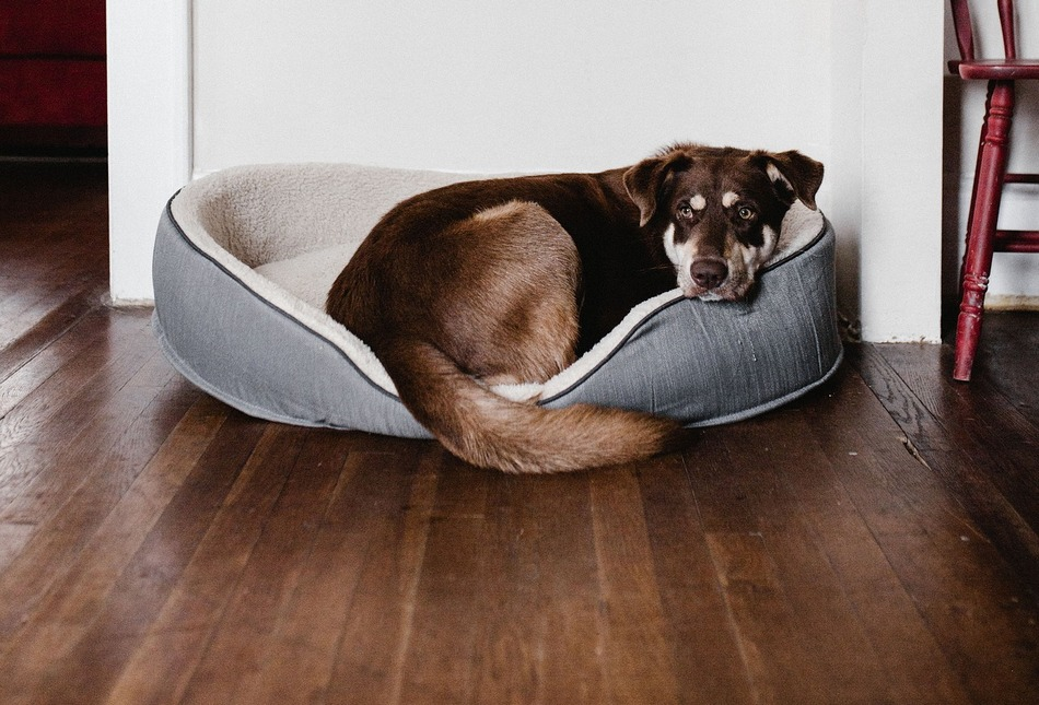 Fatty Tumors in Dogs - How are They Treated? - DogVills