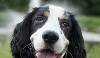 3 Things You Can Do Right Now to Improve Your Dog's Recall