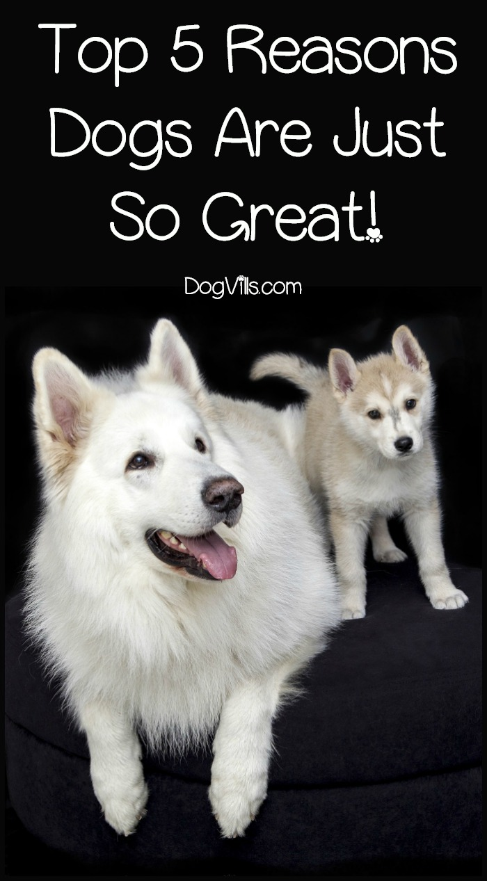 Top 5 Reasons Dogs Are Just So Great!