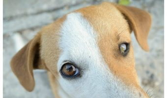 What Causes White Gums in Dogs?